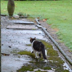 See Rob? He was actually out. And came back! Look at those ears - much happier big boy