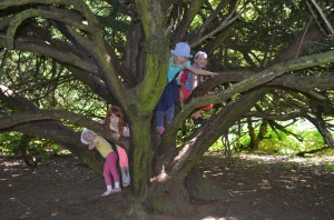 I hope we don't get scolded for letting the kids climb this tree!